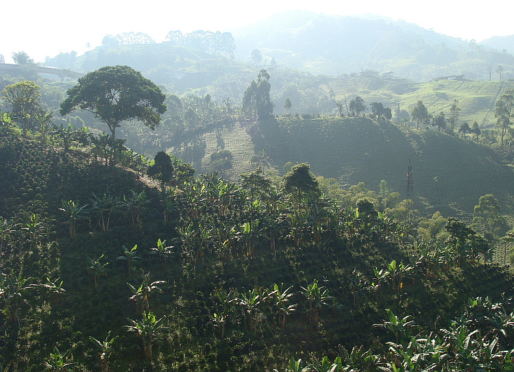 The Coffee Triangle north of Pereira