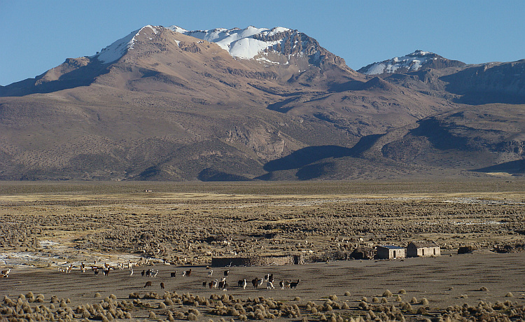 The Altiplano between Sajama and the Chilean border
