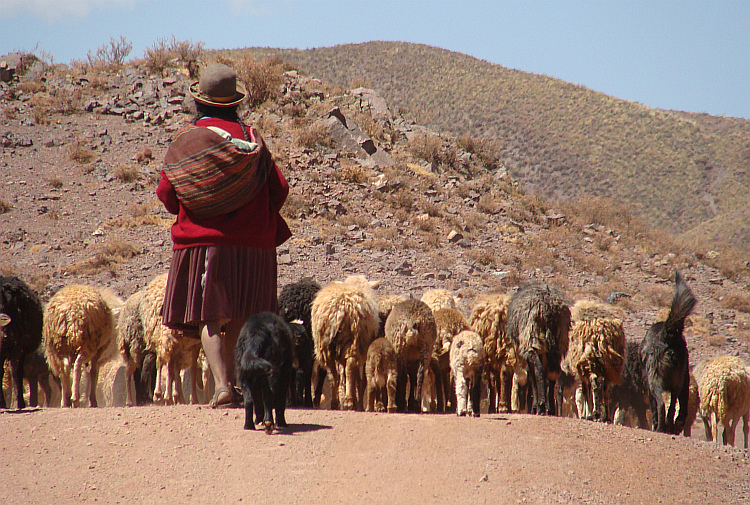 Shepherdess on the route from Oruro to Sucre
