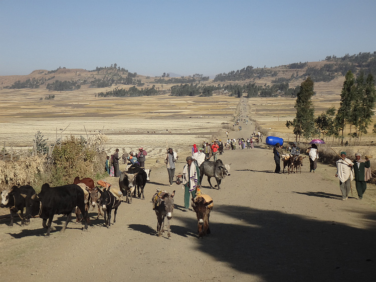 A procession of people leaving the market of Were Ilu several kilometers away