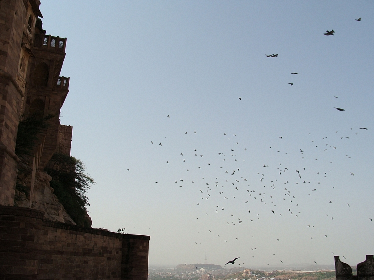 Birds! Hitchcock fantasy becomes reality in the palace of Jodhpur
