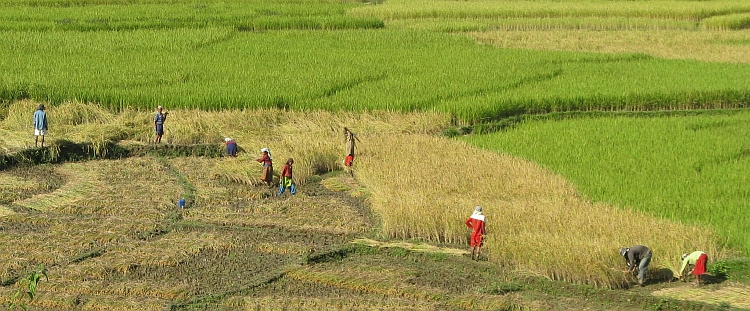People working on the land between Pokhara and Damauli