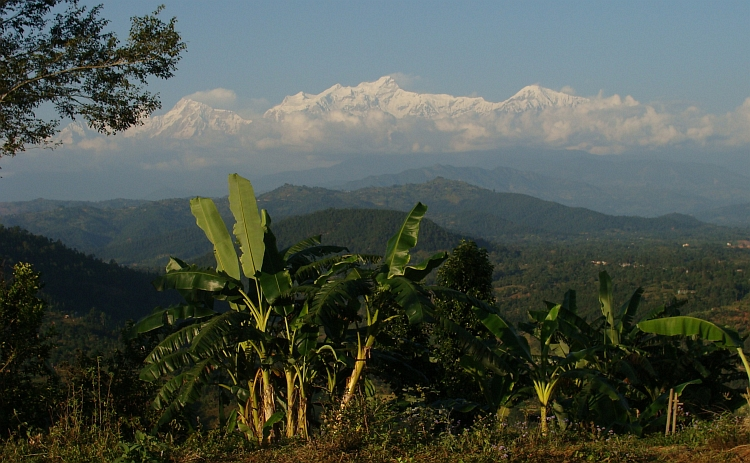 Banana trees and the Himalayas. Himal Chuli in the center and Manaslu left