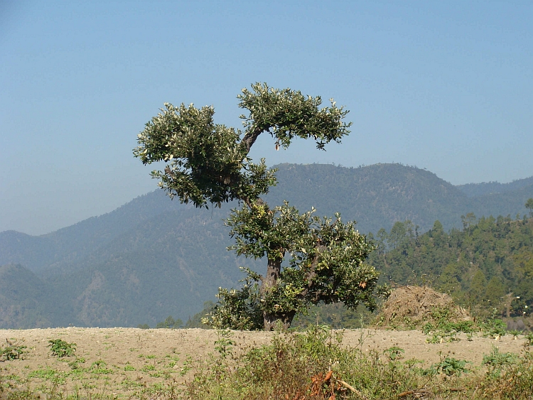 Landscape on the descent to Hetauda