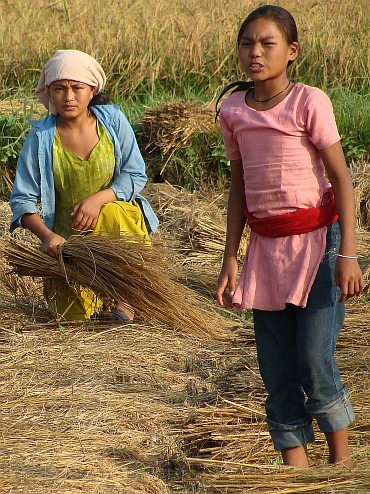 Women on the land, Chitwan