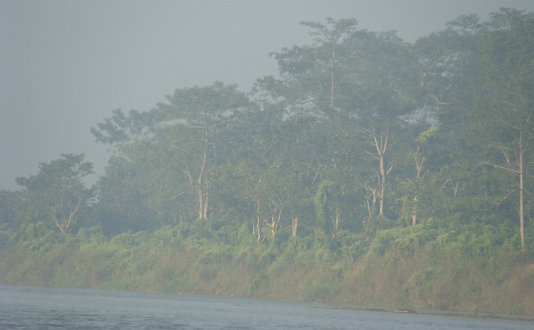 Jungle across the Rapti River, Chitwan