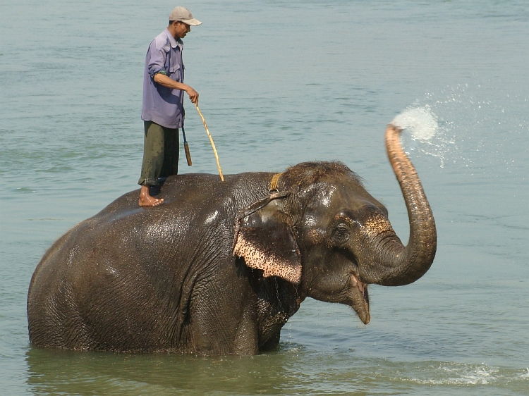 Bathing Elephant, Chitwan